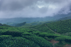 Munnar (Sujith Ninan) Tags: travel photography sony sonya6000 35mm 16mm kerala india munnar landscapes monsoon vsco asia friends digital flower sky tree green mountians portrait family roadtrip road car bw new me