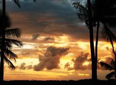 preciso voltar... (Ruby Ferreira ) Tags: coqueiros coconut silhuetas silhouettes sunset maceial sonydsch5 northeastbrazilian