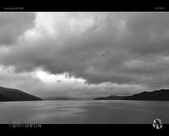 Misty Majesty (tomraven) Tags: cloud grey misty balcakandwhite bird seagull gull dancinggull degull tomraven aravenimage ferry interislander sounds samsung q32016 nx1000 newzealand