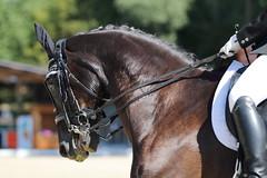 IMG_7406 (dreiwn) Tags: dressage dressur dressuur pferd reitturnier turnierreiten pferdesport horse horseback horseriding equestrian reitverein dressurprfung kandare doublebridle reiten pferde reitplatz ridingarena