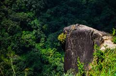 #the rock #edge #mount #rainforest #usco #ios #_ios #8_ios #vs copy ##vsco Phil ##vsco clicks #VSCO #close_up #inspired_traveller #natgeo #instagram #forest (mohanbabu847) Tags: inspiredtraveller closeup usco ios natgeo forest edge rainforest mount instagram vsco vs 8ios