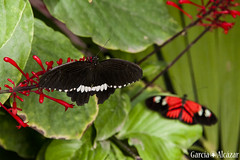 Mariposa 4 (Manolo G.A.) Tags: canon 50d 18200 mariposa butterfly mariposario njar almera
