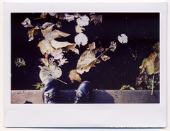 291366  18 October 2016  Autumn (Doug Churchill) Tags: 365 366 fujiinstax300 instax instaxwide project project366