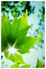 IMGP1189 (danlalan7) Tags: lumire sousbois dtail feuille jaune plante vert