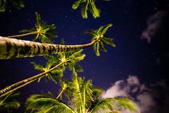 the stars and the palms (Ben McLeod) Tags: hawaii maui palmtree beach longexposure night stars trees