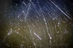 caught in an amazing web of daydreams (ggcphoto) Tags: web amazing dreams light bokeh spider nature