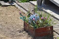 Somehow forgotten... (petrOlly) Tags: europe europa poland polska polen lodz cemetery summer flower flowers