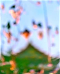 F_DSC9386-1-Nikon D800E-Nikkor 105mm F2.8-May Lee  (May-margy) Tags: maymargy imageinalotuspond          mylensandmyimagination linesformandlightandshadows naturalcoincidencethrumylens    taiwan repofchina fdsc93861 witheredlotusplant building roof lotuspond reflection blur bokeh taipeicity nikond800e nikkor105mmf28 maylee