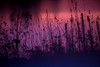 20161006-IMG_5192.jpg (Ole Jørn Solberg) Tags: høst kveldslys rødt kveldsrød