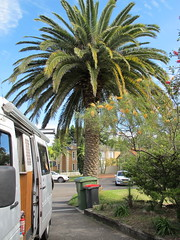 The front pine (spelio) Tags: campsite driveway frontyard garden letterbox palm tree angela
