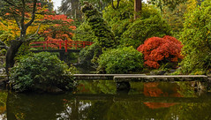 Tranquility (Daniel P Froese) Tags: kubota seattle washington washingtonstate image images picture pictures photo photos reflection pool river japanese garden maple autumn fall fallcolor colors tranquil bridge red trees
