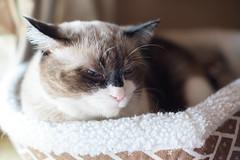KINA 2016.10.14 (HarQ Photography) Tags: cat sleep neko fujifilm fujifilmxseries zhongyioptics speedmaster35mmf095ii