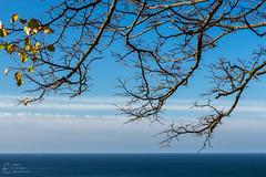 (klgfinn) Tags: autumn balticsea branch cloud landscape leaf sea shore sky skyline tree treebranch water