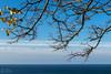 Лес на берегу (klgfinn) Tags: autumn balticsea branch cloud landscape leaf sea shore sky skyline tree treebranch water балтийскоеморе берег ветка веткадерева вода горизонт дерево лист море небо облако осень пейзаж
