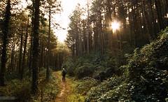 324/365 De paseo por el Perdn (Photographordie) Tags: autumn man verde green forest pen path olympus noviembre bosque sigma1020 perdon 365dias sigma1020mm1456dchsm microfourthirds microcuatrotercios sierradelperdn epm2 olympuspenepm2
