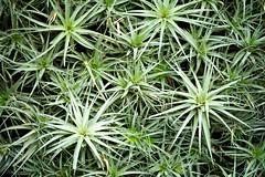 Green Wall (mattwitmer) Tags: plant green wall zeiss 85mm longwoodgardens otus