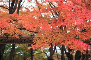 常寂光寺 jojakko-ji temple