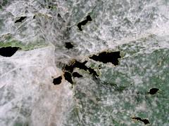 天氣變冷小心感冒,作物也要注意防治白粉病