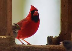 DSC03131 (jbstarr2) Tags: snow birds feeder