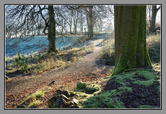 Frost and Sun (Pat's Images) Tags: highcontrast localwoods mainsestate