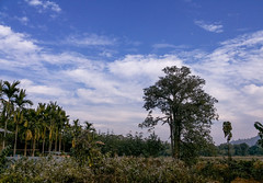 Beautiful Day ! (ApurbaPhotography2013) Tags: clouds landscape december village samsung grand galaxy assam