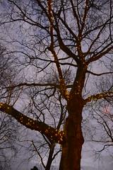 Lighted tree (evadejonge) Tags: winter light sky tree nature lights nederland thenetherlands natuur boom amusementpark efteling wonderland kaatsheuvel