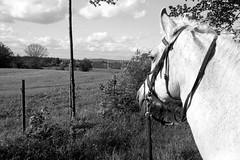 Leika (christian.riede) Tags: film md minolta 24mm bayreuth 100asa x700 leika rokkor adox silvermax