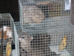 Caged Pets
