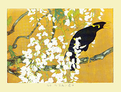 Japanese wisteria and common hill myna (Japanese Flower and Bird Art) Tags: flower bird art japan print japanese hill fabaceae common wisteria tsuchiya woodblock nihonga religiosa floribunda myna sturnidae gracula rakusan readercollection