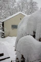 Let it snow! (II) (dididumm) Tags: schnee winter house snow cold haus hedge letitsnow kalt hecke