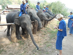 Dorota - Thai Elephant Home