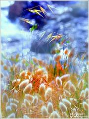 PETALES ET COULEURS (Gilles Poyet photographies) Tags: nature fleurs soe autofocus cration aplusphoto artofimages rememberthatmomentlevel1 rememberthatmomentlevel2