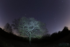 Brandon Woods 21st February 2015 (boddle (Steve Hart)) Tags: life road wild england sky nature night canon dark lens stars star evening is timelapse angle natural britain wildlife bruce united steve great wide wideangle twinkle testing trail l hart astronomy steven nightsky usm coventry standard ef fisheyes 6d wilds wyke startrail kingdon 1635mm 24105mm wyken boddle 815mm