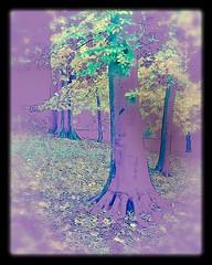 Mystery tree (Princess 812) Tags: abstract tree colors leafs rockville mysterytree marylandusa