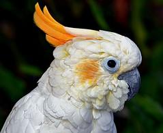 DSC_0695 (forestforthetress) Tags: bird nature birds animal animals eyes nikon florida fowl animalplanet omot