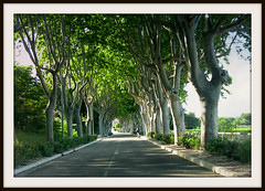 FRANCE - Provence, Camargue ,Platanenallee, on the road again, 12513/4854 (roba66) Tags: road travel trees france tree tourism nature alberi landscape reisen frankreich arboles urlaub natur paisaje visit explore provence avenue landschaft francia bume franca voyages allee camargue camarque platanenallee naturalezza arbes provenca roba66 patanen centrallandstrase