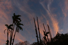 IMG_7661 (JoanZoniga) Tags: sunset sky clouds canon palms photography costarica colours silhouettes atenas cielo nubes canoneoskissx7