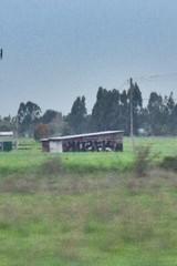 Ku2fk (That_Good_Stuff) Tags: berg graffiti hwy freeway genitals northbay uwold berg45 ku2f