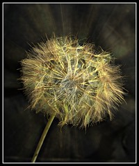 Weed (patrick.verstappen) Tags: hdr weed flower photo nikon sigma summer belgium picassa pinterest pat d7100