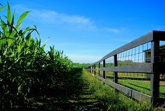 fence and field (LaLa83) Tags: blue summer sky green nature field fence outdoors corn farm sony country july alpha 2016 hff a230 pickawaycounty happyfencedfriday