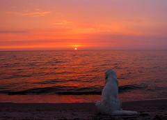 Sunset bliss (Ingrid0804) Tags: sunset sea sky beach goldenretriever zen bliss sunsetbliss