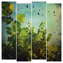 Green leaves and sunshine (jeanne.marie.) Tags: textures trees birds sunshine summer iphone5s iphoneography panels turquoise green leaves 100xthe2016edition 100x2016 image80100