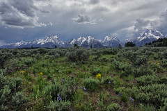 Tetons (snowpeak) Tags: wildflowers wyoming grandtetons sonyrx10iii