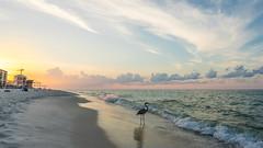 Florida Sunrise (KD Robinson) Tags: ocean travel sky orange seascape color detail bird beach water colors beautiful clouds sunrise us sand view unitedstates florida peaceful oceanview impressive pensacola perdidokey