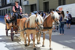 Salzburg. Austria. (Svitlana Clover) Tags: salzburg austria city street horses crew journey tour vacation people ride canoneos550d