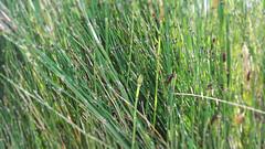 bamboo (Pasqualino Ubaldini) Tags: verde colore image background bamboo fiori canna rami legno canne pianta sfondo sfondi bamb vivaio pasqualino ubaldini