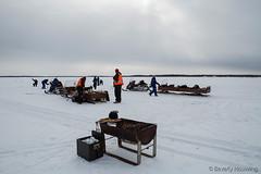 34-IceFishing8 copy (Beverly Houwing) Tags: fish suomi finland frozen lapland kukkola icefishing kukkolankoski tornioriver