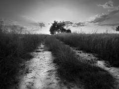 Into the light (Radek Fluder) Tags: light sky blackandwhite bw cloud tree dark way landscape path poland polska