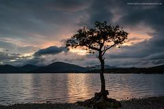 Midge Madness at Millarochy Bay (Damon Finlay) Tags: landscape bay scotland oak nikon d750 loch nikkor lomond f4 lochlomond lonetree stirlingshire 1635mm millarochy millarochybay nikkor1635mmf4 nikond750