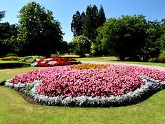 In Full Blossom (Manoo Mistry) Tags: tamron18270mmzoom park canonhillpark birmingham